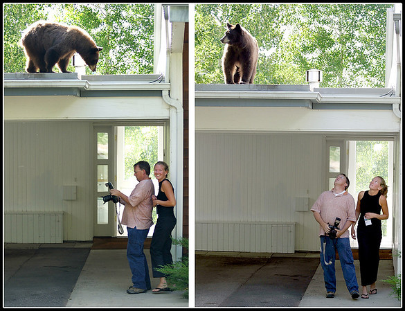 © Paul Conrad/Pablo Conrad Photography - Photographing a black bear in Aspen, Colo.